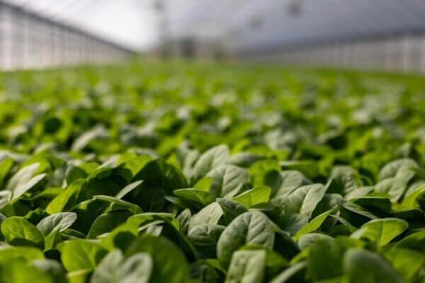 Eerlijk zakendoen in de voedselvoorzieningsketen
